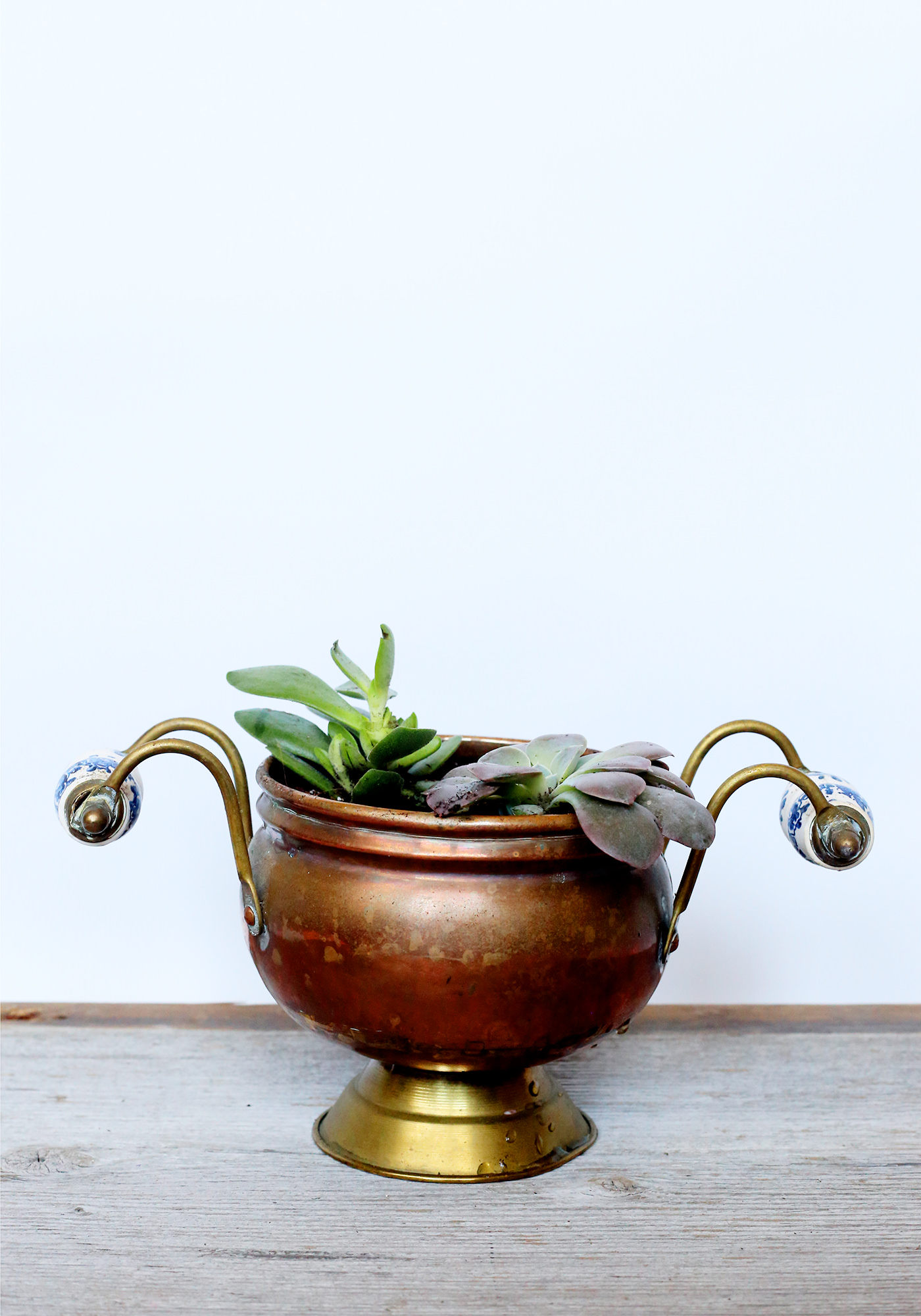 A thrifted copper footed dish is the perfect planter for some vibrant green succulents!