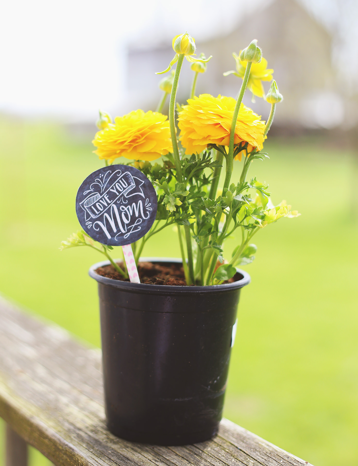 Add something extra to pretty ranunculus flowers with our Mother's Day gift label and a paper straw as the skewer!