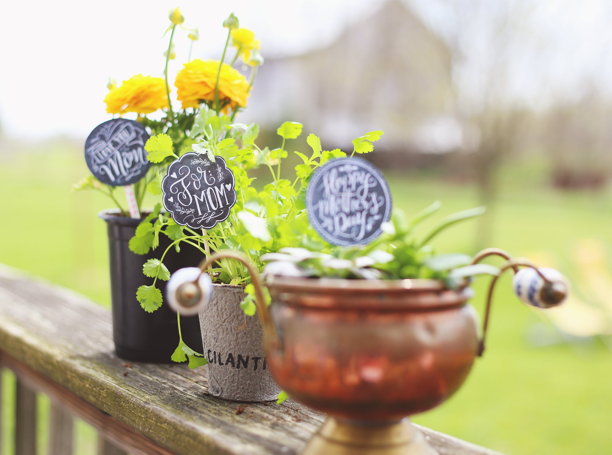 No need for wrapping or ribbons, just download our free, chalkboard Mother's Day gift tags and your plants will be gift-ready!