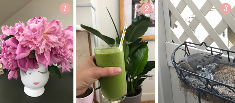 Lily & Val Presents: Pretty Ordinary Friday #56 presents pink peonies, green smoothies, a family of pigeons