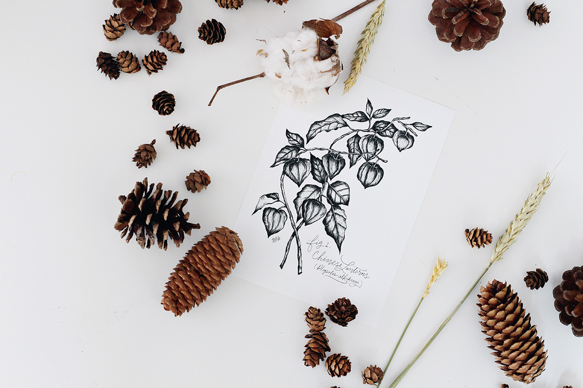 hand-drawn botanicals are featured in this year's L&V Fall Collection. Pen and ink botanical drawing