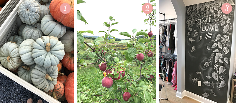 Lily & Val Presents: Pretty Ordinary Friday #69 with blue pumpkins, apple orchards and Urban Fit Co. chalk art wall