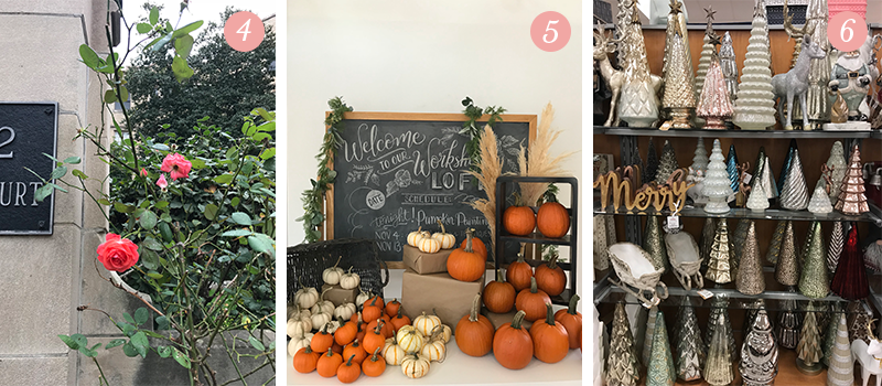 Lily & Val Presents: Pretty Ordinary Friday #74 with roses in the Fall, L&V pumpkin painting patch and Christmas trees at TJMaxx