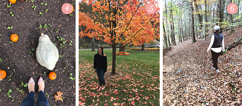 Lily & Val Presents: Pretty Ordinary Friday #75 with pumpkins and gourds, gorgeous Autumn trees and fall hikes through the woods in Bedford, PA