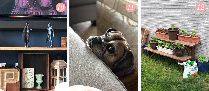 Lily & Val Presents: Pretty Ordinary Friday #93 with boy mom decor, loving boxer looks and potted gardens