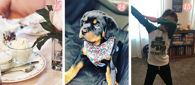 Lily & Val Presents: Pretty Ordinary Friday #103 with tea time, new Rottweiler puppies and baby #2 announcements